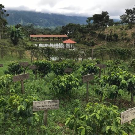 Honduras Las Capucas