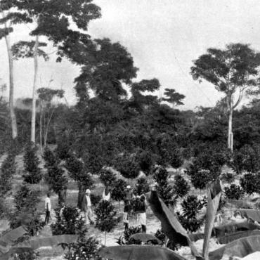 Cafeaua în Republica Democrată Congo