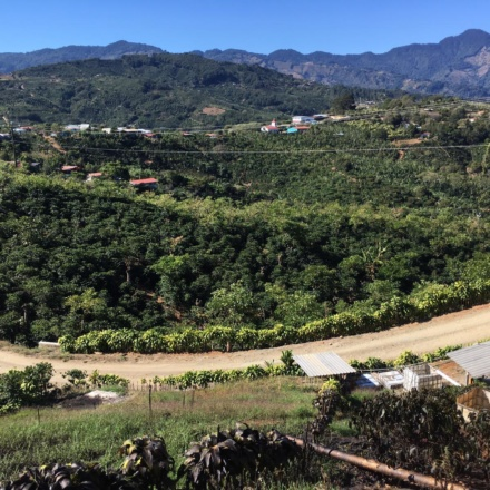 Costa Rica - Finca San Cristobal