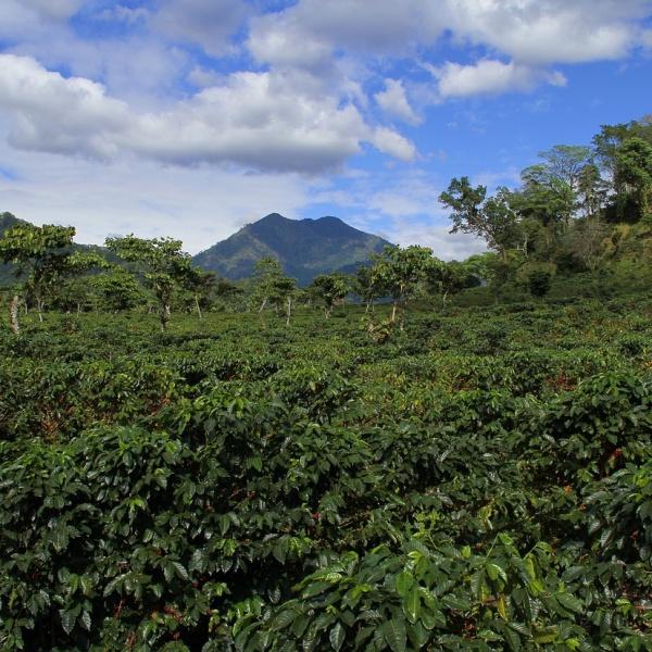 landscape-Guatemala