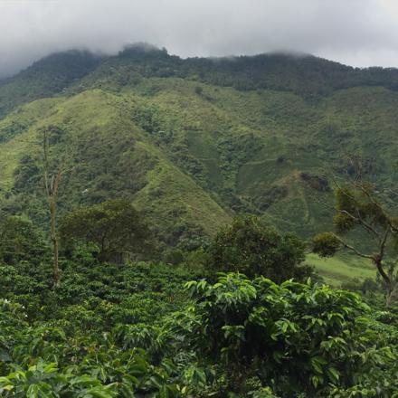 palmicColumbia Finca Palmichal