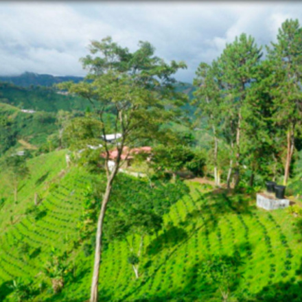 Cafea San Jose Huila
